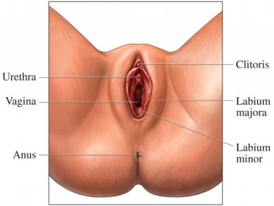 Related clitoris org ua size размер клитора